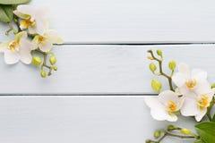 Orquídea da beleza em um fundo cinzento Cena dos termas fotos de stock royalty free