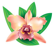 Orquídea da flor Foto de Stock