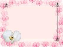 Orquídea de canto floral do projeto ilustração royalty free