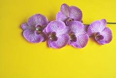 Orquídea de florescência bonita fotografia de stock royalty free
