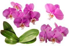 Orquídea de florescência collage Isolado fotografia de stock