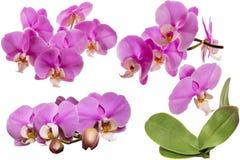 Orquídea de florescência collage Isolado Com folhas imagens de stock