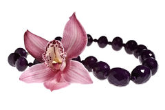 Orquídea de la belleza Foto de archivo