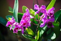 Orquídea de la belleza Foto de archivo libre de regalías