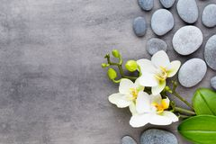 Orquídea de la belleza en un fondo gris Escena del balneario Foto de archivo libre de regalías