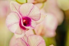 Orquídea de la flor Fotos de archivo