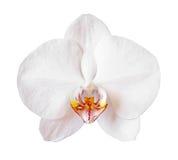 Orquídea de la flor imágenes de archivo libres de regalías
