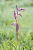 Orquídea de la flor Imagen de archivo