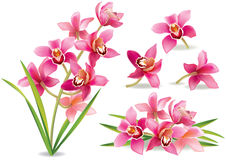 Orquídea de la rama Fotos de archivo