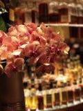 Orquídea del salón Imagenes de archivo