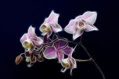 Orquídea diminuta Imagem de Stock Royalty Free