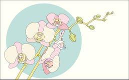 Orquídea do ramo ilustração do vetor