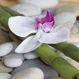 Orquídea e bambu Fotografia de Stock Royalty Free