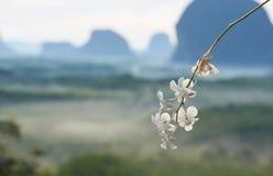 Orquídea e fundo bonitos da cordilheira no ponto de vista imagem de stock royalty free