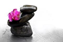 Orquídea em seixos Fotos de Stock