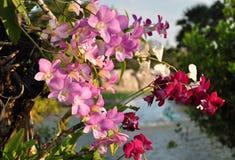 Orquídea en el árbol en el jardín Foto de archivo libre de regalías