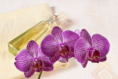Orquídea en el cuarto de baño Fotos de archivo libres de regalías