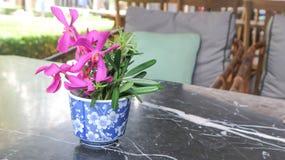 Orquídea en el florero Imagenes de archivo