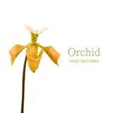Orquídea en el fondo blanco, aislado Fotos de archivo