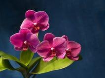 Orquídea en el metal Foto de archivo libre de regalías
