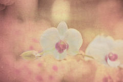 Orquídea en el papel viejo del grunge fotografía de archivo libre de regalías