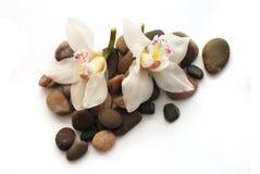 Orquídea en las piedras Imagenes de archivo