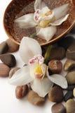 Orquídea en las piedras Fotografía de archivo