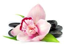 Orquídea en las piedras negras Fotografía de archivo libre de regalías