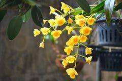 Orquídea en mi hogar imágenes de archivo libres de regalías