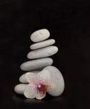 Orquídea en rocas Imagenes de archivo