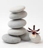 Orquídea en rocas Fotos de archivo