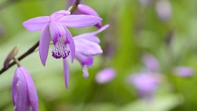 Orquídea en superior izquierdo