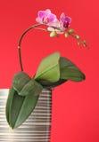Orquídea en un crisol de la planta Imagen de archivo