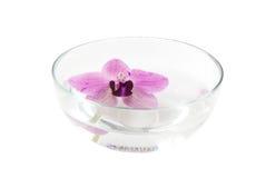 Orquídea en un tazón de fuente Fotografía de archivo libre de regalías