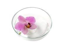 Orquídea en un tazón de fuente Fotografía de archivo