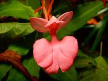 Orquídea extraña en el bosque Fotografía de archivo