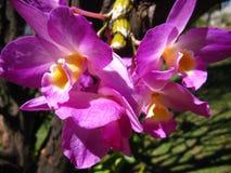 Orquídea - flores Fotos de archivo