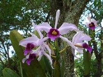Orquídea - flores Foto de archivo libre de regalías