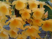 Orquídea - flores Imagen de archivo