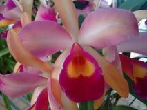 Orquídea - flores Fotografía de archivo