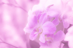 A orquídea floresce o fundo Fotografia de Stock