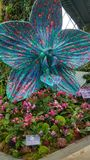 Orquídea grande de Singapur Orchidea Garden imagen de archivo libre de regalías