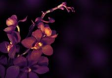 Orquídea hermosa Fotos de archivo libres de regalías