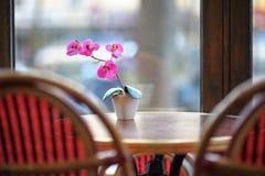 Orquídea hermosa de la lila en el pote blanco en la tabla Fotos de archivo