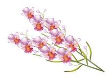 Orquídea hermosa de Vanda aislada en el fondo blanco ilustración del vector