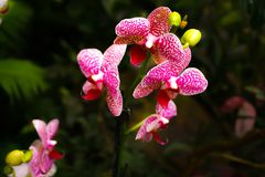 Orquídea hermosa - detalle en la flor fotos de archivo libres de regalías