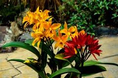 Orquídea hermosa - detalle en la flor fotografía de archivo