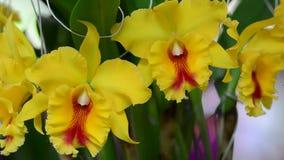 Orquídea hermosa en el parque almacen de metraje de vídeo
