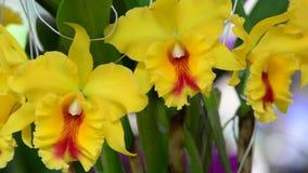 Orquídea hermosa en el parque almacen de video