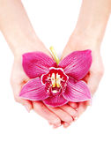 Orquídea hermosa en palmas de los womans Imagen de archivo libre de regalías